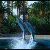 Siegfried And Roys Secret Garden Dolphin Habitat